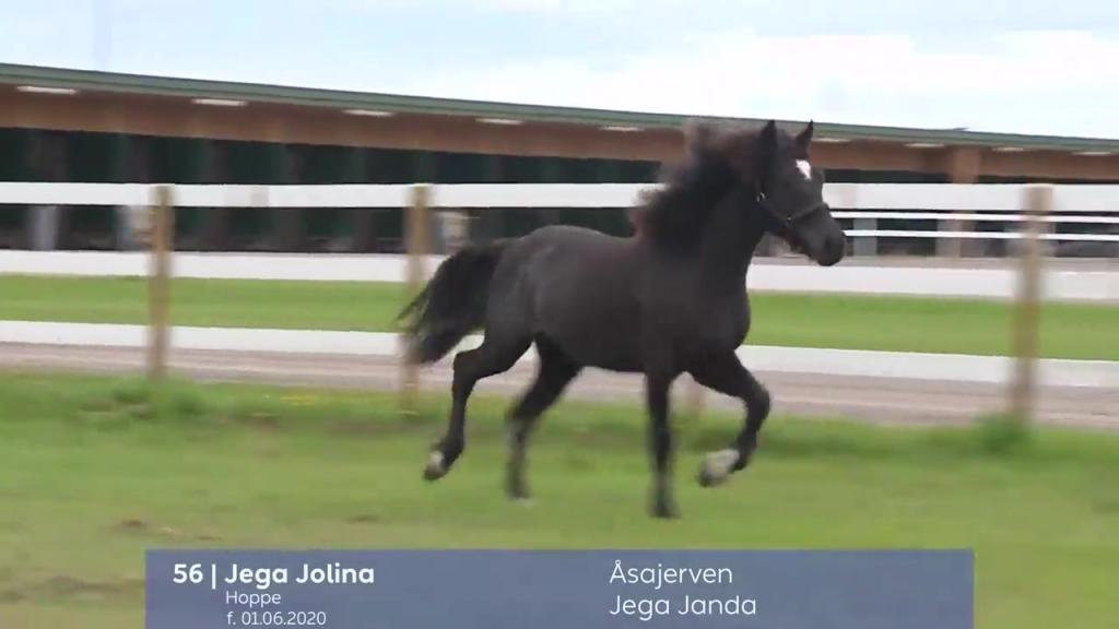 # 56 - Jega Jolina